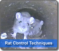 rat control for you home
